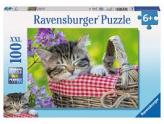 Sleeping Kitten 100Pc