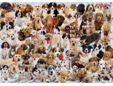 Dogs Galore! 1000Pc