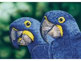 Diamond Dotz Blue Hyacinth Macaws.