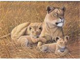 African Lioness & Cubs